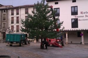 poniendo el árbol