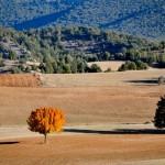 Bosques de sabinas y carrascas